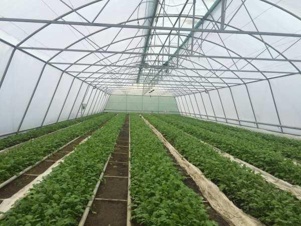 Продажа действующего и полностью оборудованного Теплично, Крестьянско-фермерского хозяйства