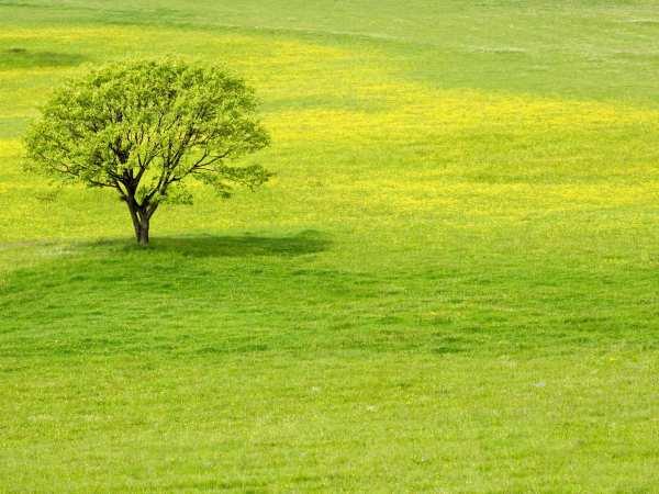 Выявление негативного воздействия на окружающую среду