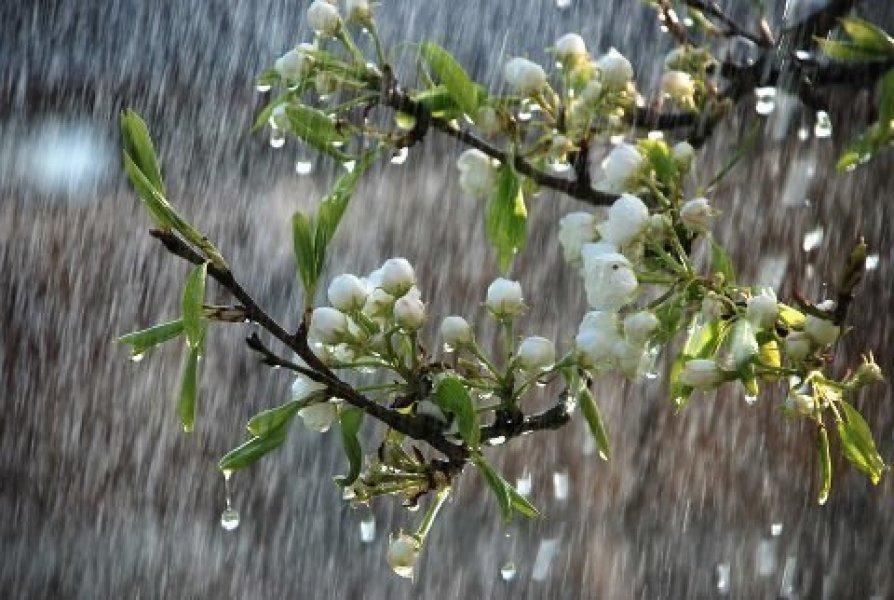 В Краснодарском крае в выходные пройдут сильные дожди