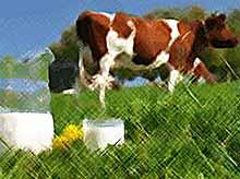 В Тимашевском районе производство молока увеличилось на 188 кг в расчете на каждую дойную корову
