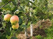 Садоводы Кубани просят увеличения господдержки
