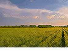 Названы крупнейшие владельцы сельскохозяйственной земли в России