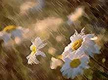 В Краснодарский край вернутся дожди и грозы