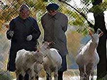 Почти 1 млн сельских жителей с 2019 г будут получать допвыплату к пенсии