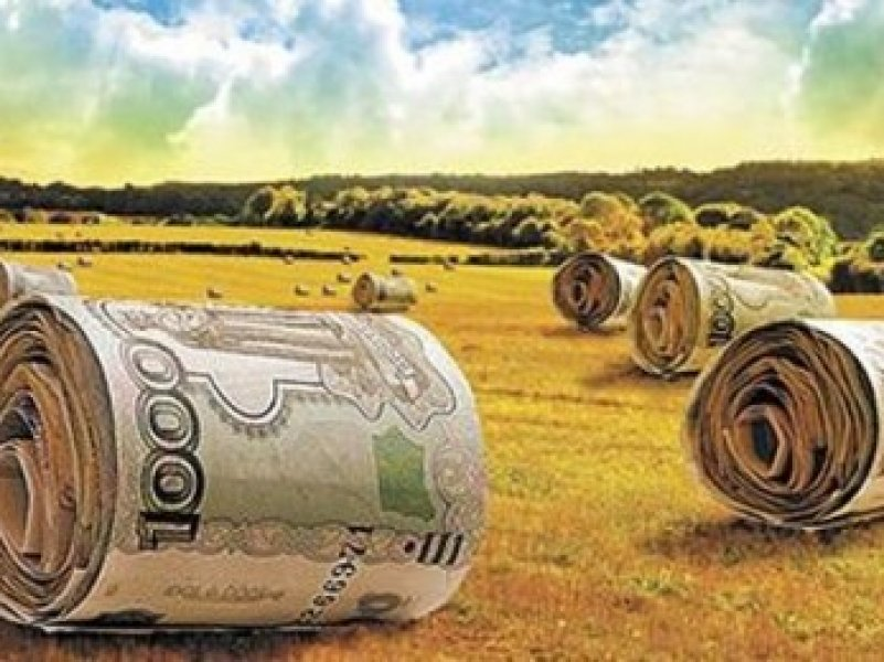 Сельхозтоваропроизводители  получат отсрочку по платежам по льготным кредитам на год