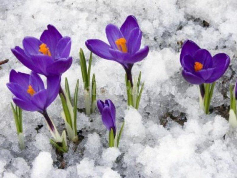 Почему почти  на всей территории России установилась аномально теплая зима?