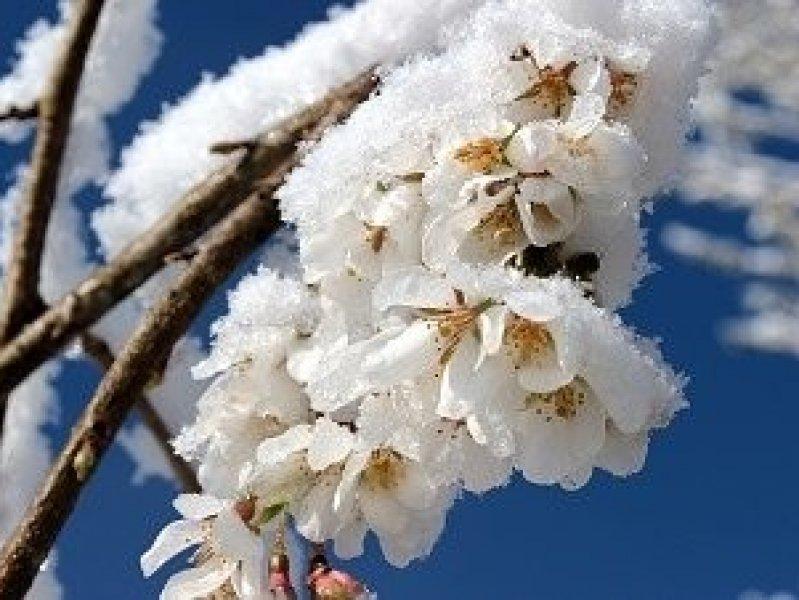В Краснодарском крае прогнозируют заморозки до -10 градусов