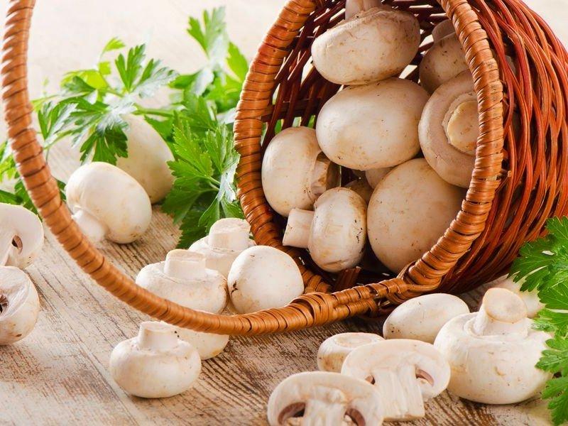 В России грибы внесли в перечень сельскохозяйственной продукции