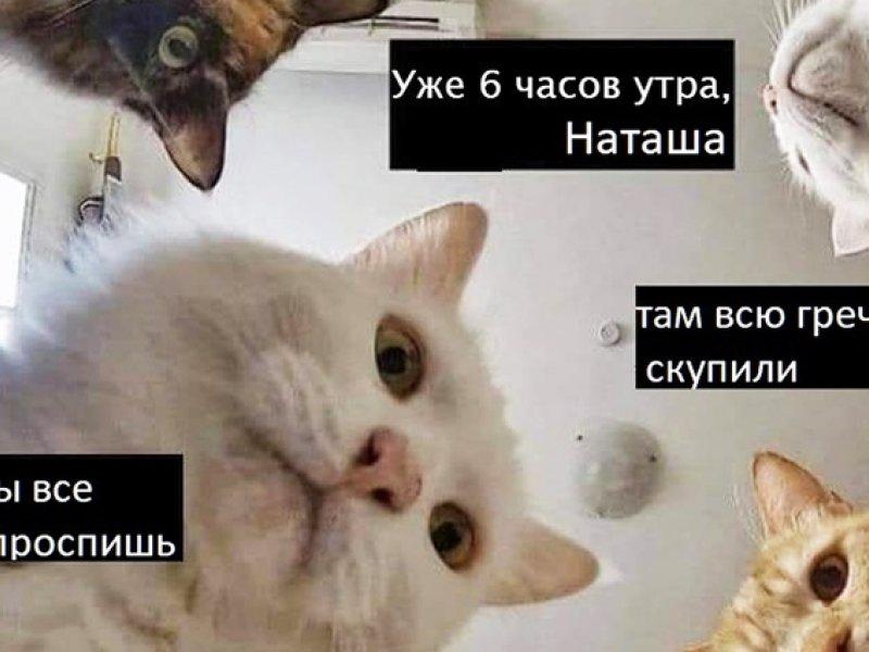 Мемы про Наташу и котов - смешная подборка