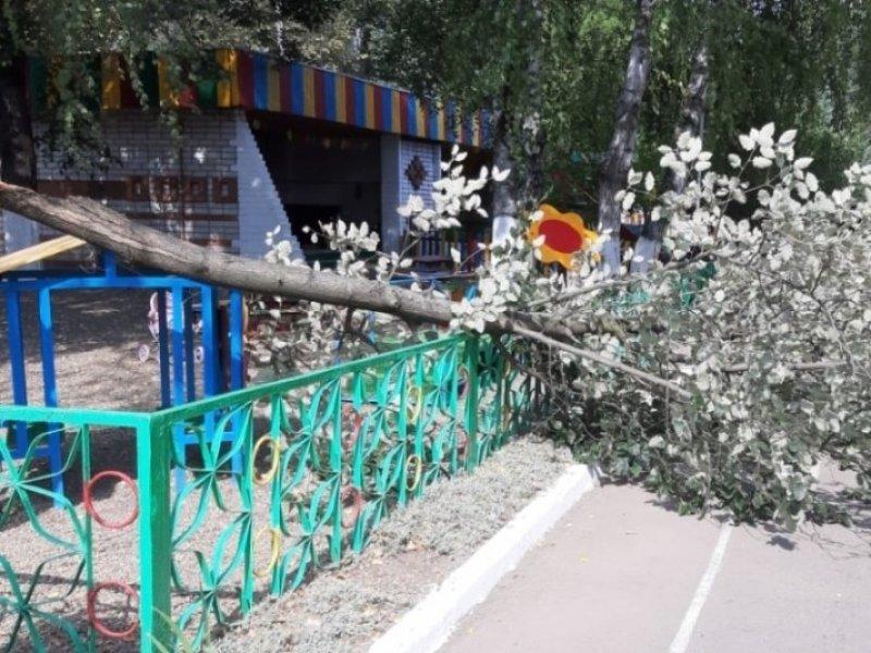 В  детсадах и школах Краснодара из-за сильного ветра запретили прогулки и занятия на улице
