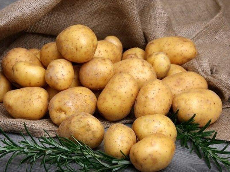 В России предлагают продавать картофель «эконом класса»
