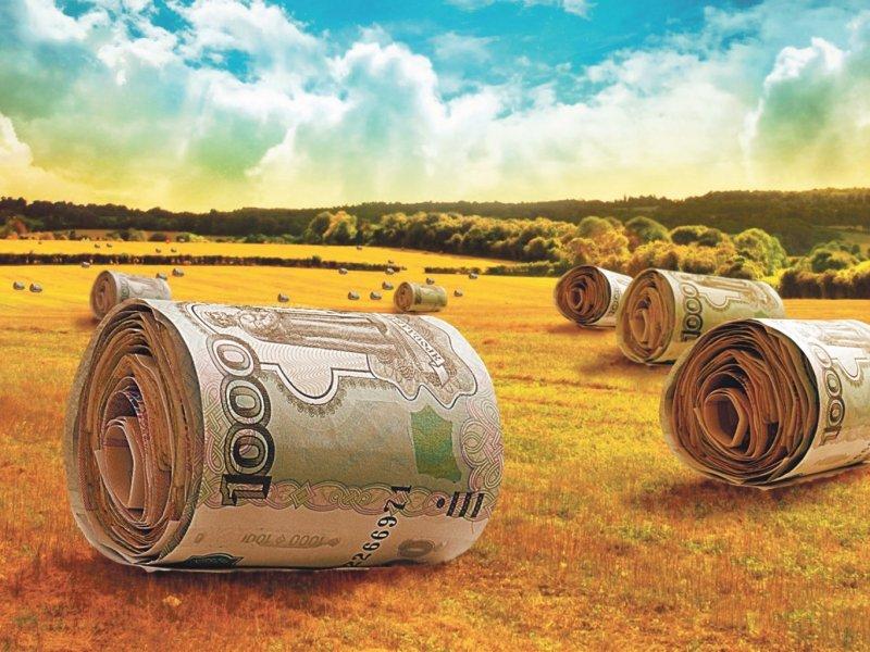 Доступные льготные кредиты могут получить и начинающие сельхозпроизводители