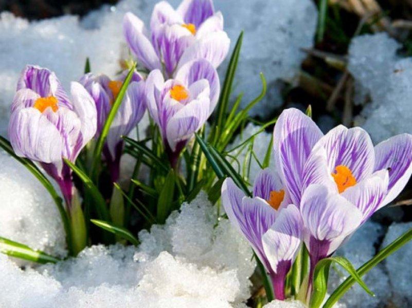 Весна придет в Россию во второй половине марта
