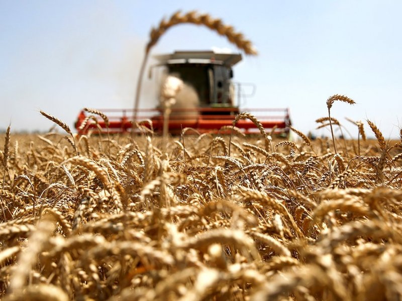 Краснодарский край  собрал  рекордные 12,4 млн тонн зерна