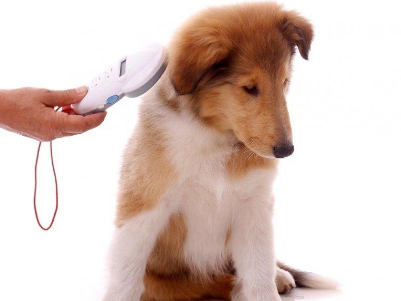 В России хотят маркировать чипами домашних животных