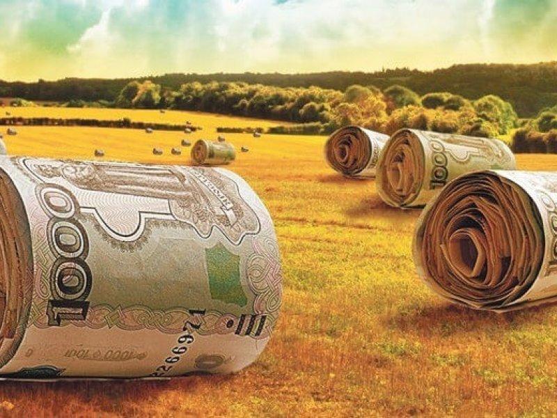 На гранты фермерам власти Кубани выделят свыше 630 млн руб