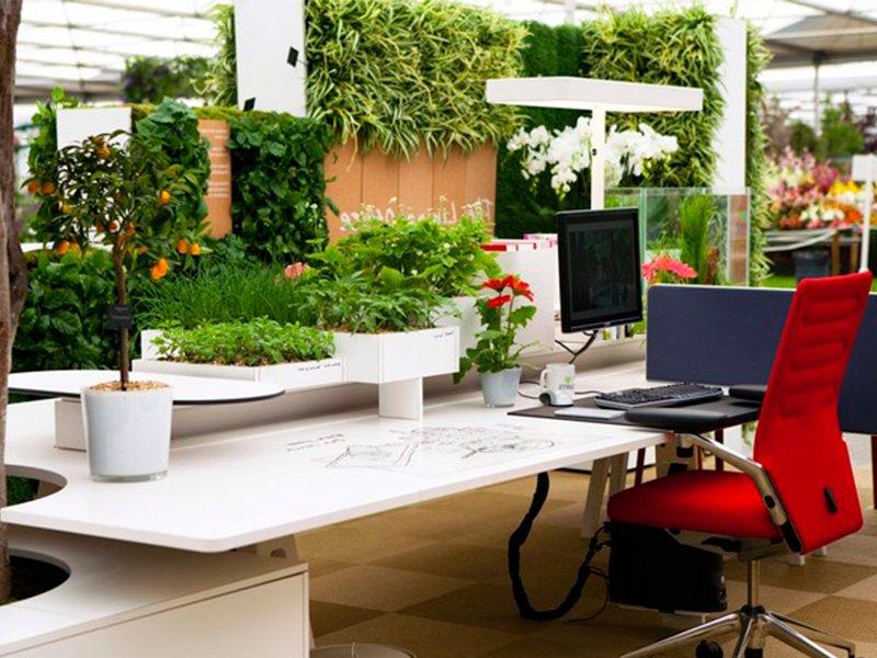 Чтобы воздух в офисе и доме был чистым: ТОП-7 растений
