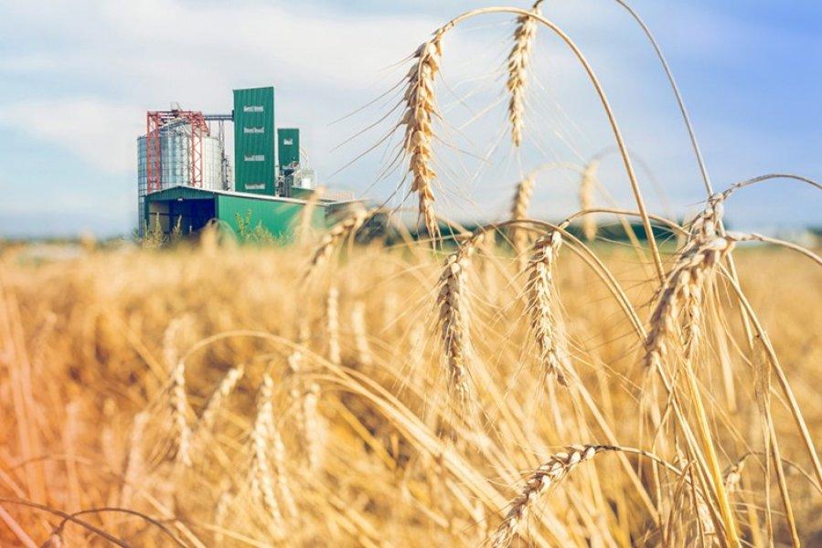 В Краснодарском крае  директора элеватора и его зама будут судить за обман фермеров на 14 млн рублей