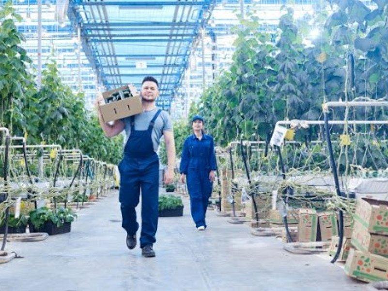В России одним из лучших работодателей признан «Агрокомплекс»