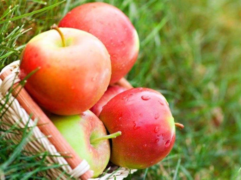 Кубанское садовое хозяйство собрало почти  30 тыс. тонн яблок