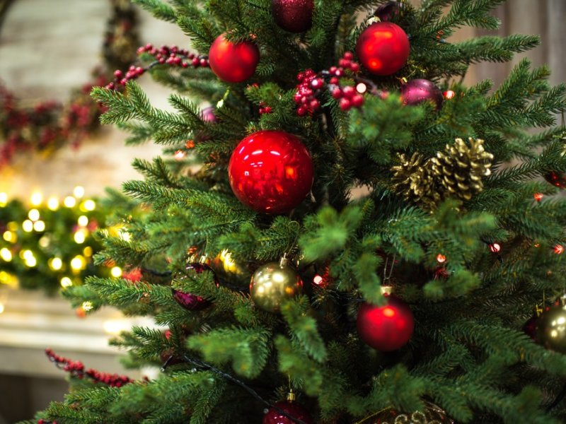 Почему дома нельзя долго держать новогоднюю елку