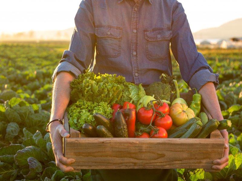 В России разрешат продажи сельхозтоваров на своей земле