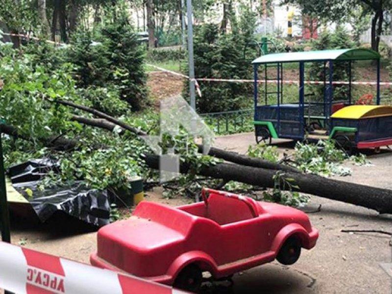В Краснодаре в детском саду упало дерево: погиб ребенок