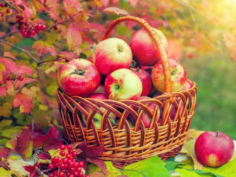В 2020 году в России соберут 1,08 млн тонн плодов и ягод