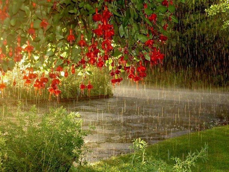 На Кубани прогнозируются дожди