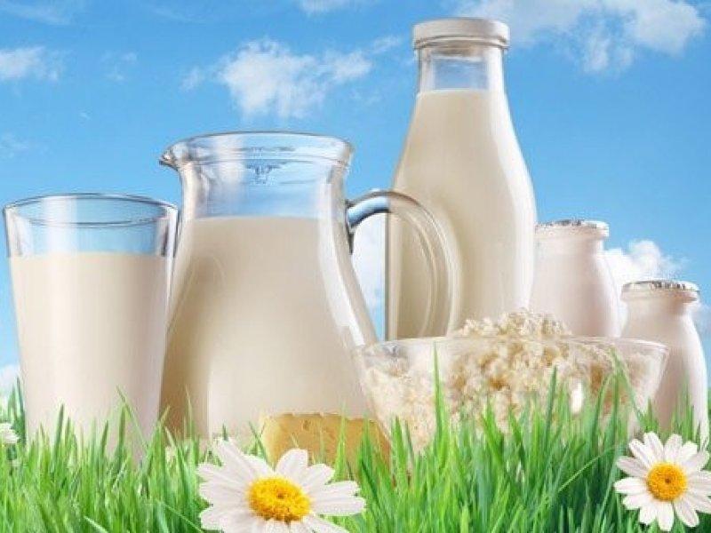 В России молоко хотят избавить от антибиотиков