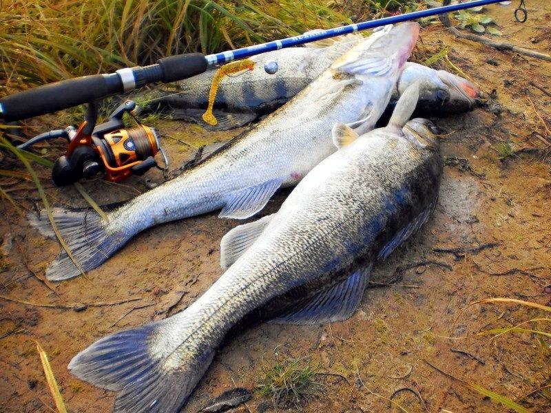 Для рыболовов-любителей