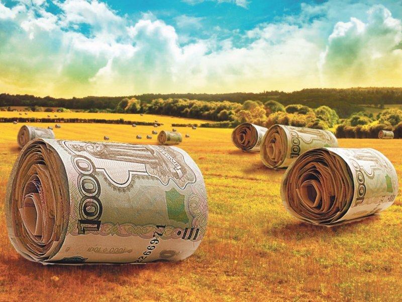 На Кубани будет увеличена господдержка сельского хозяйства до 9 млрд рублей