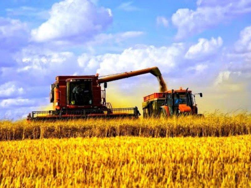 Кубань первой в России завершила уборку зерновых