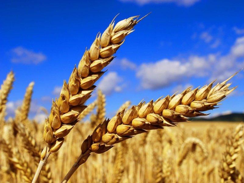 Впервые судно с российской пшеницей отправлено в Бразилию из порта «Тамань»