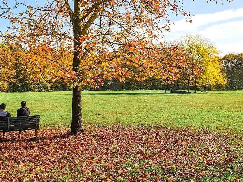 Что делать с опавшими листьями?