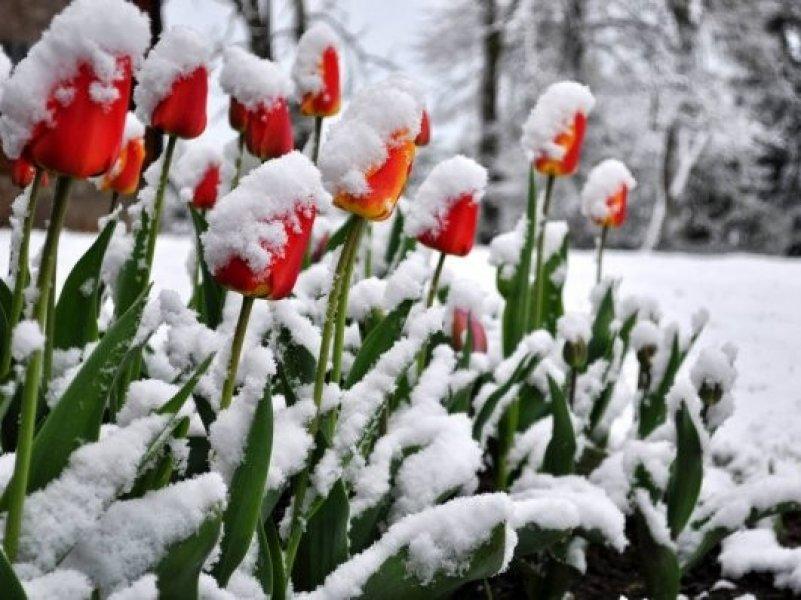 Жителям Кубани предсказали холодный март