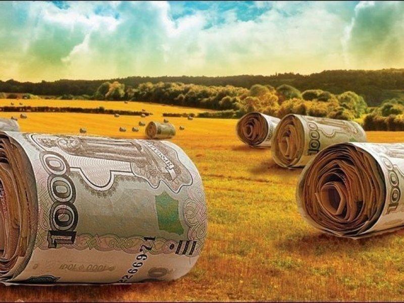 На Кубани хотят распространить агрострахование на случаи потери качества урожая
