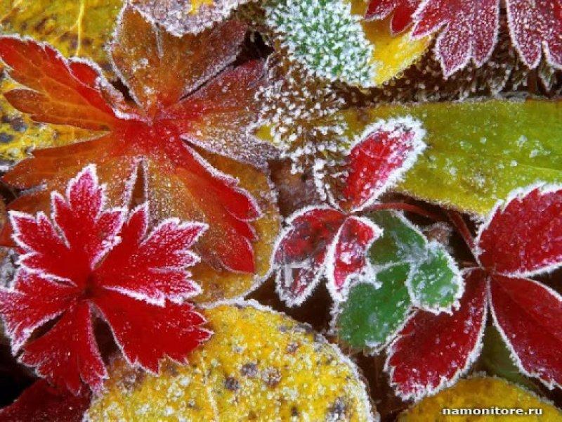 На юге России прогнозируются первые заморозки