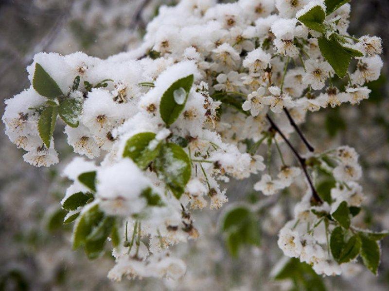 На Кубани объявлено экстренное предупреждение по заморозкам
