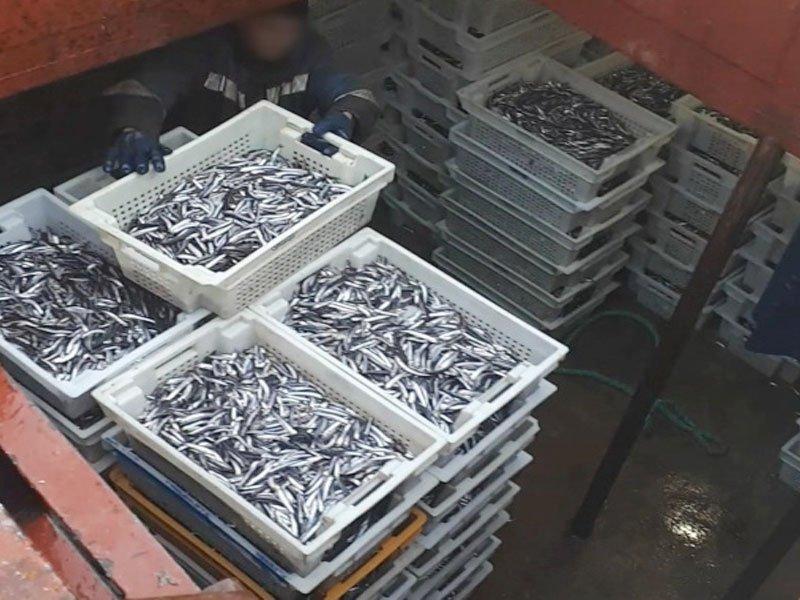 Пограничники нашли на судне более 6 тонн сырца неучтеной хамсы