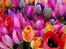 Цветы  к 8 марта можно купить на специализированной ярмарке в Краснодаре