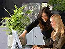 Растения в офисе помогают лучше работать