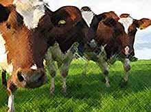 Минфин РФ предложил ввести патентную систему в животноводстве и растениеводстве