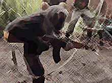 Обезьяна расстреляла солдат из автомата АК-47 (ВИДЕО)