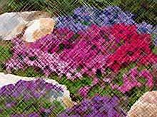 Цветник и почвопокровные растения