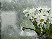 На Кубани ожидается дождливая погода