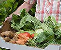 Цены на овощи стремительно растут