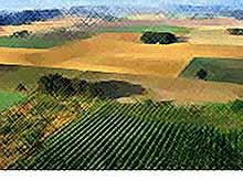 Минэкономразвития  предлагает распространить патенты на сферу сельского хозяйства