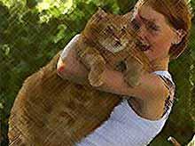 Какие болезни лечит кошка?