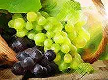 Краснодарский край стал лидером по валовому сбору винограда в России